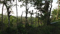 Barbwire fence in hillside landscape with dense foliage, El Plátano, Panama