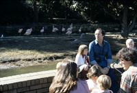 Zoo visitors sitting with flamingoes in background at Taronga Zoo, Sydney, Australia